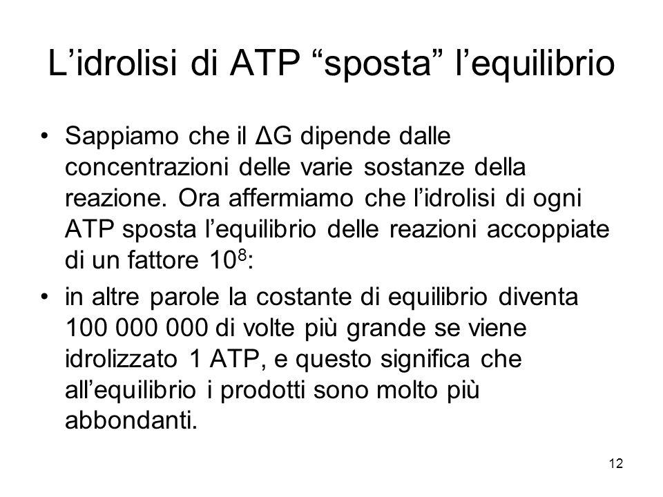 L'idrolisi di ATP sposta l'equilibrio