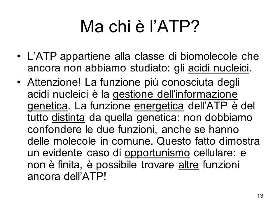 Ma chi è l'ATP L'ATP appartiene alla classe di biomolecole che ancora non abbiamo studiato: gli acidi nucleici.