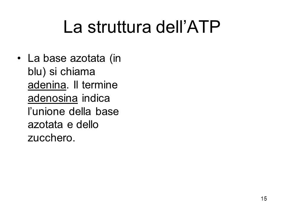 La struttura dell'ATP La base azotata (in blu) si chiama adenina.