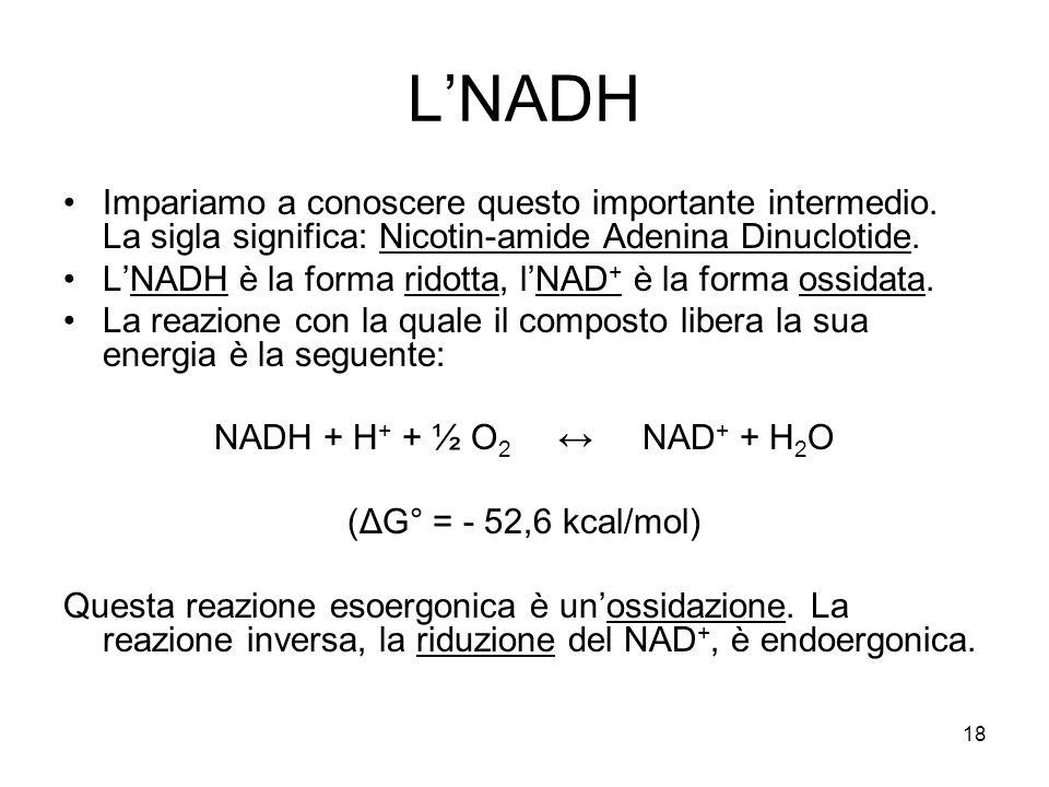L'NADH Impariamo a conoscere questo importante intermedio. La sigla significa: Nicotin-amide Adenina Dinuclotide.