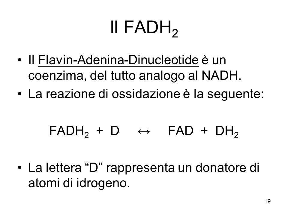 Il FADH2 Il Flavin-Adenina-Dinucleotide è un coenzima, del tutto analogo al NADH. La reazione di ossidazione è la seguente: