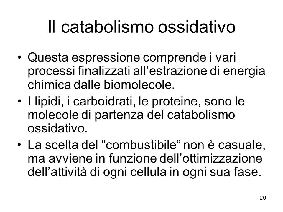 Il catabolismo ossidativo