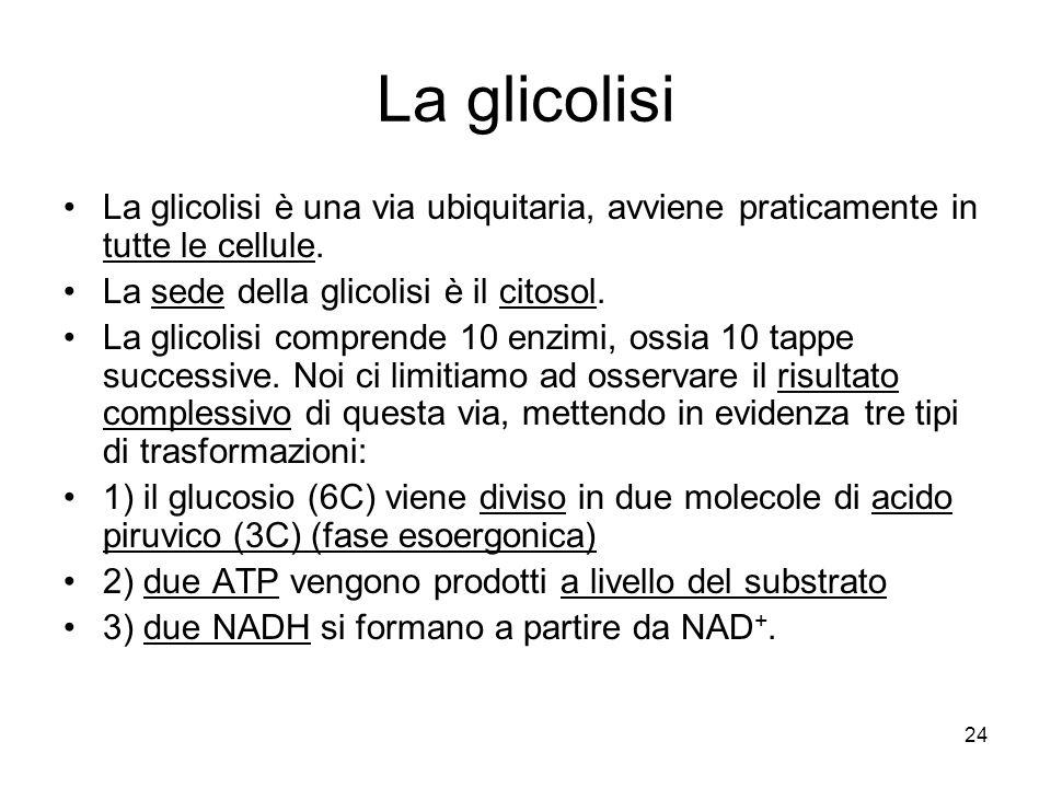 La glicolisi La glicolisi è una via ubiquitaria, avviene praticamente in tutte le cellule. La sede della glicolisi è il citosol.