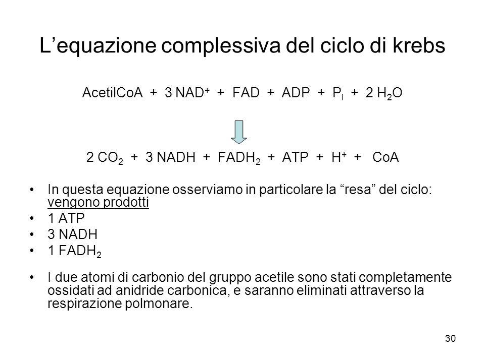 L'equazione complessiva del ciclo di krebs
