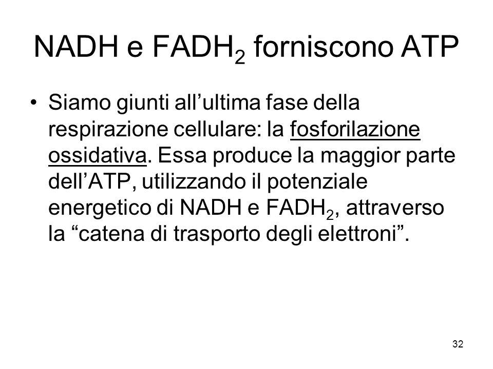 NADH e FADH2 forniscono ATP