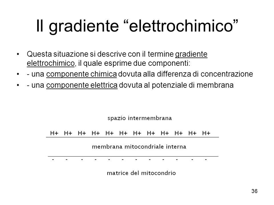 Il gradiente elettrochimico