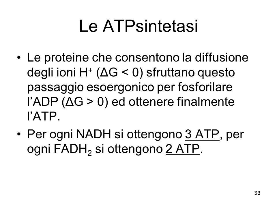 Le ATPsintetasi