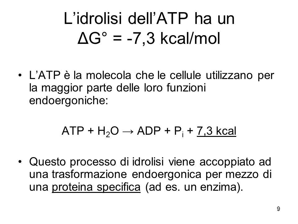 L'idrolisi dell'ATP ha un ΔG° = -7,3 kcal/mol
