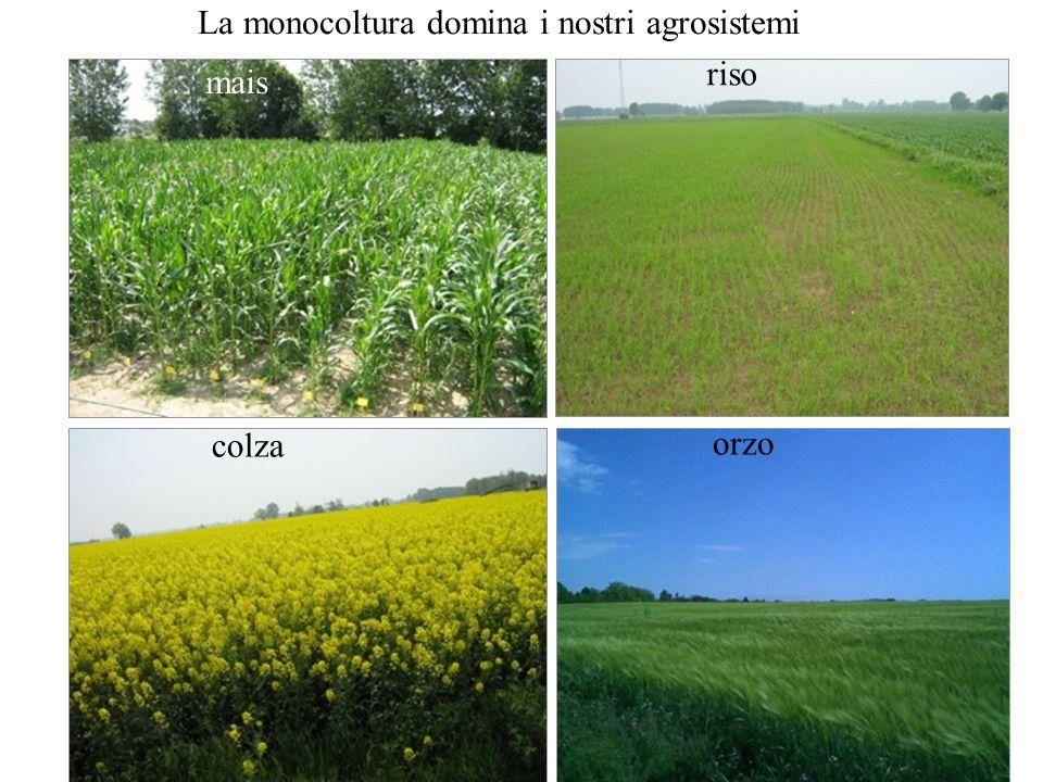 La monocoltura domina i nostri agrosistemi