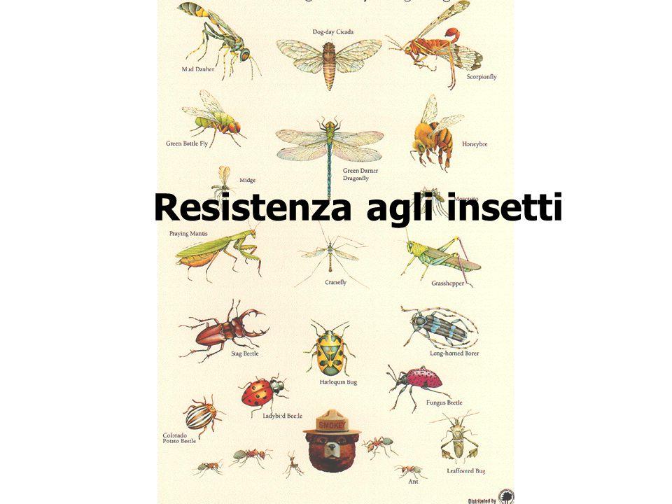 Resistenza agli insetti