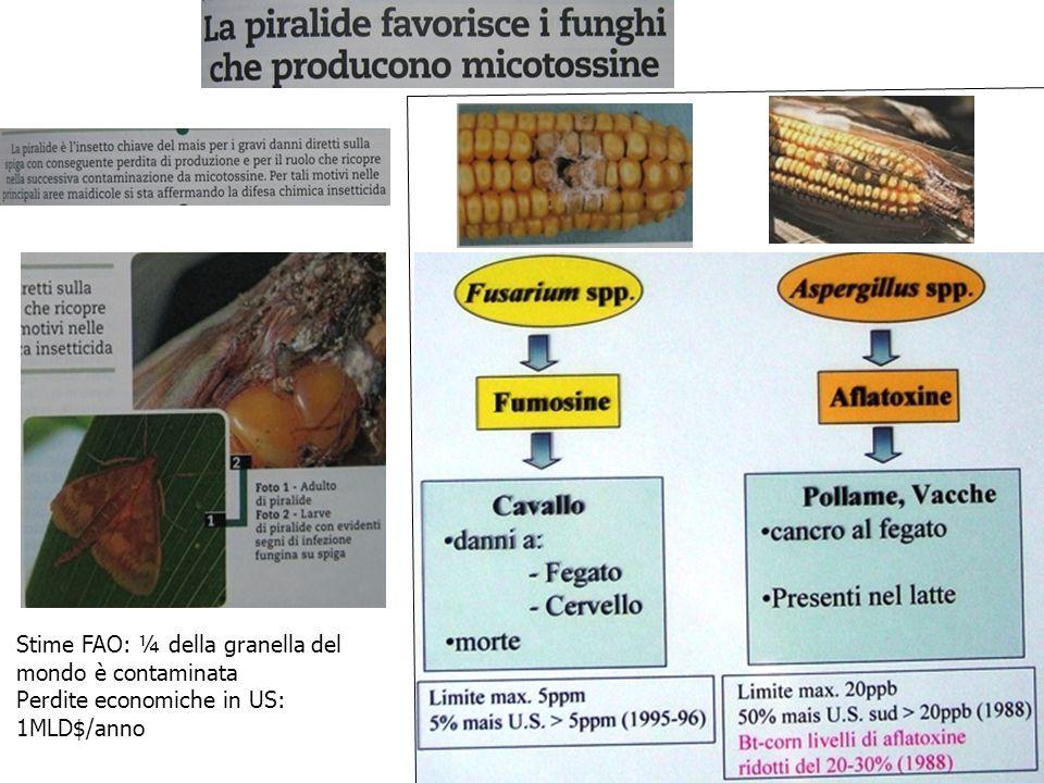 Stime FAO: ¼ della granella del mondo è contaminata