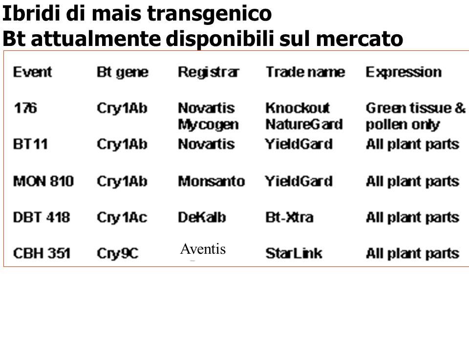 Ibridi di mais transgenico Bt attualmente disponibili sul mercato