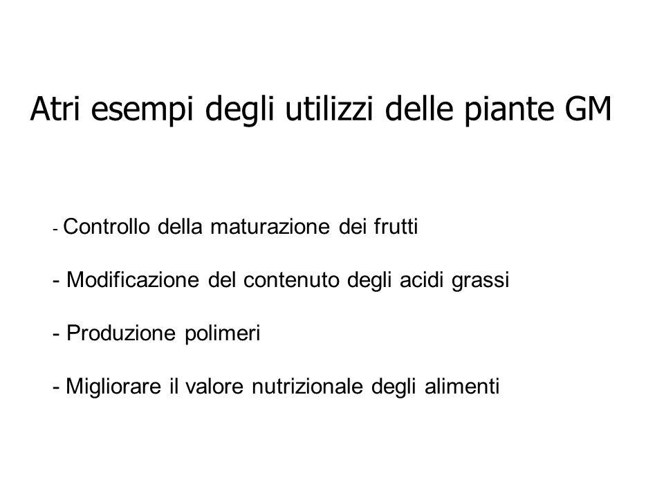 Atri esempi degli utilizzi delle piante GM