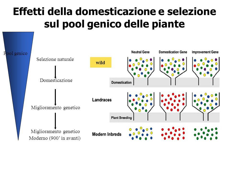Effetti della domesticazione e selezione sul pool genico delle piante
