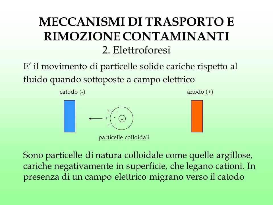 MECCANISMI DI TRASPORTO E RIMOZIONE CONTAMINANTI 2. Elettroforesi