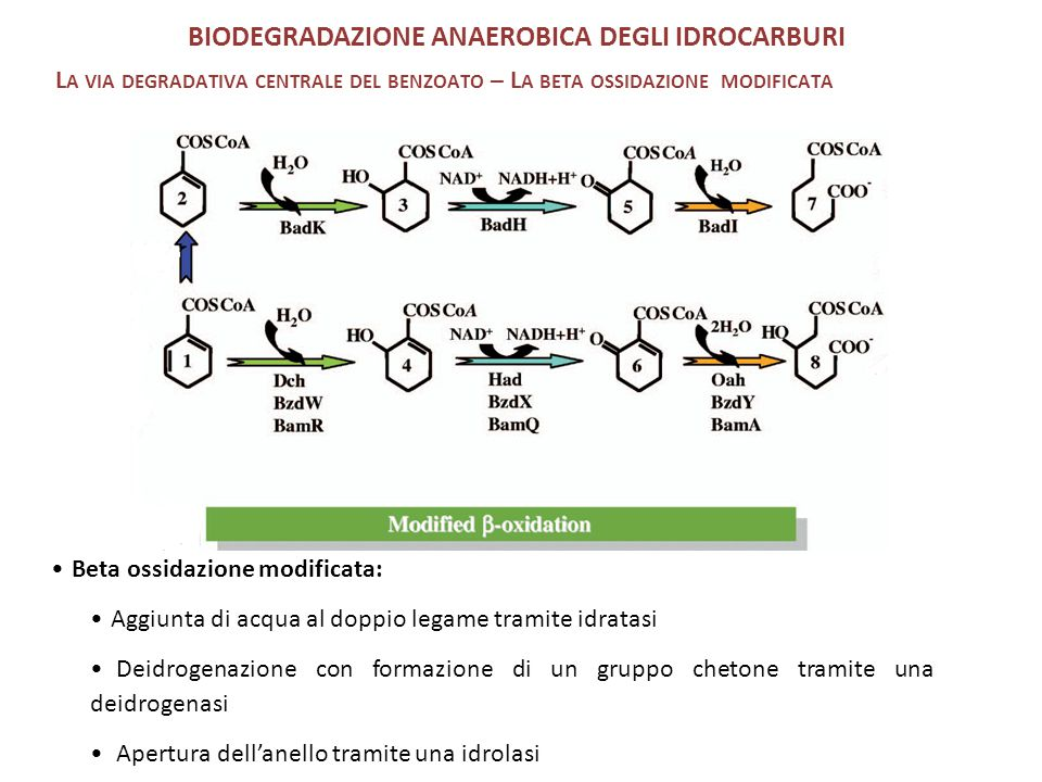 BIODEGRADAZIONE ANAEROBICA DEGLI IDROCARBURI