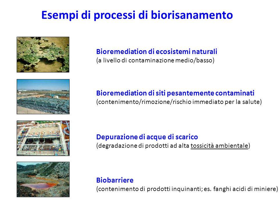 Esempi di processi di biorisanamento