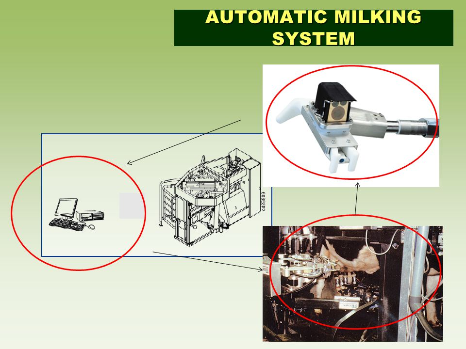 AUTOMATIC MILKING SYSTEM