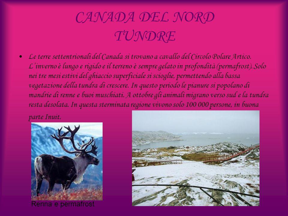 CANADA DEL NORD TUNDRE
