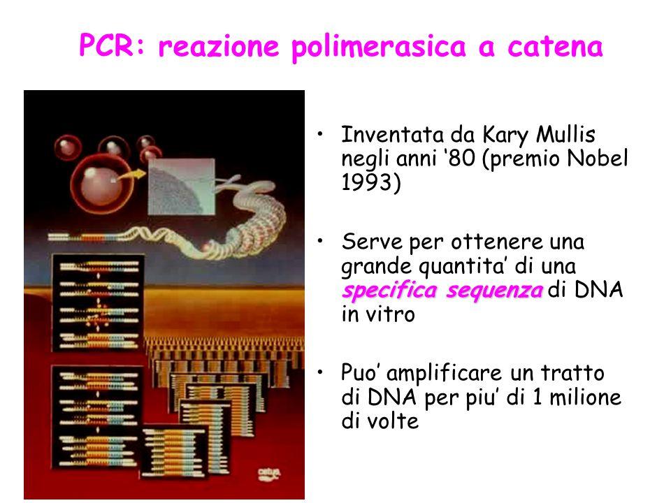 PCR: reazione polimerasica a catena