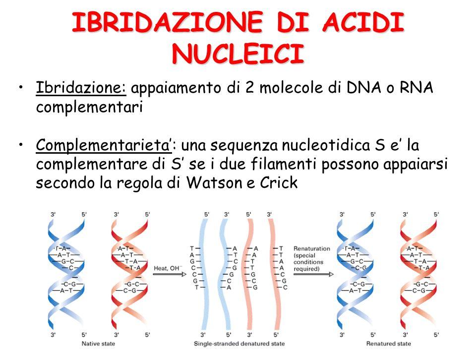 IBRIDAZIONE DI ACIDI NUCLEICI