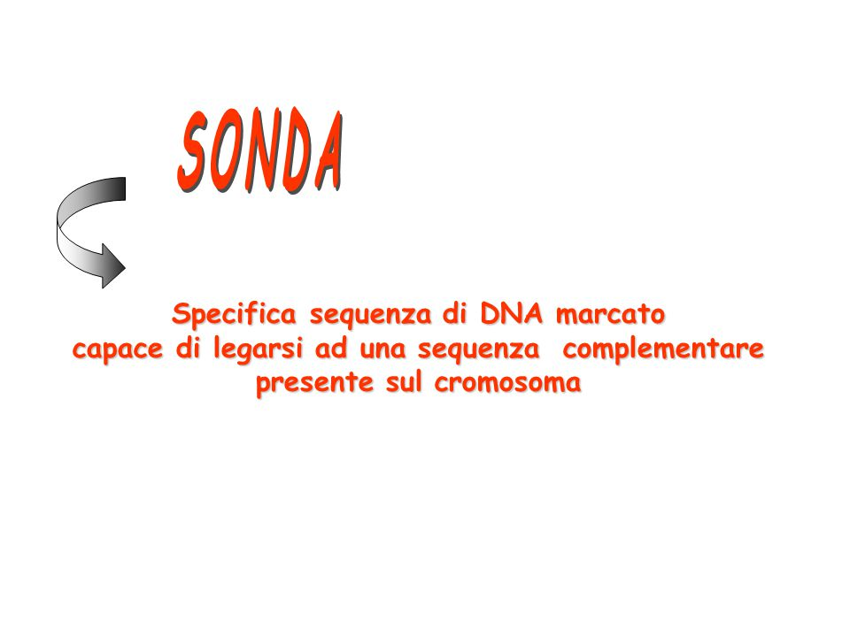 Specifica sequenza di DNA marcato