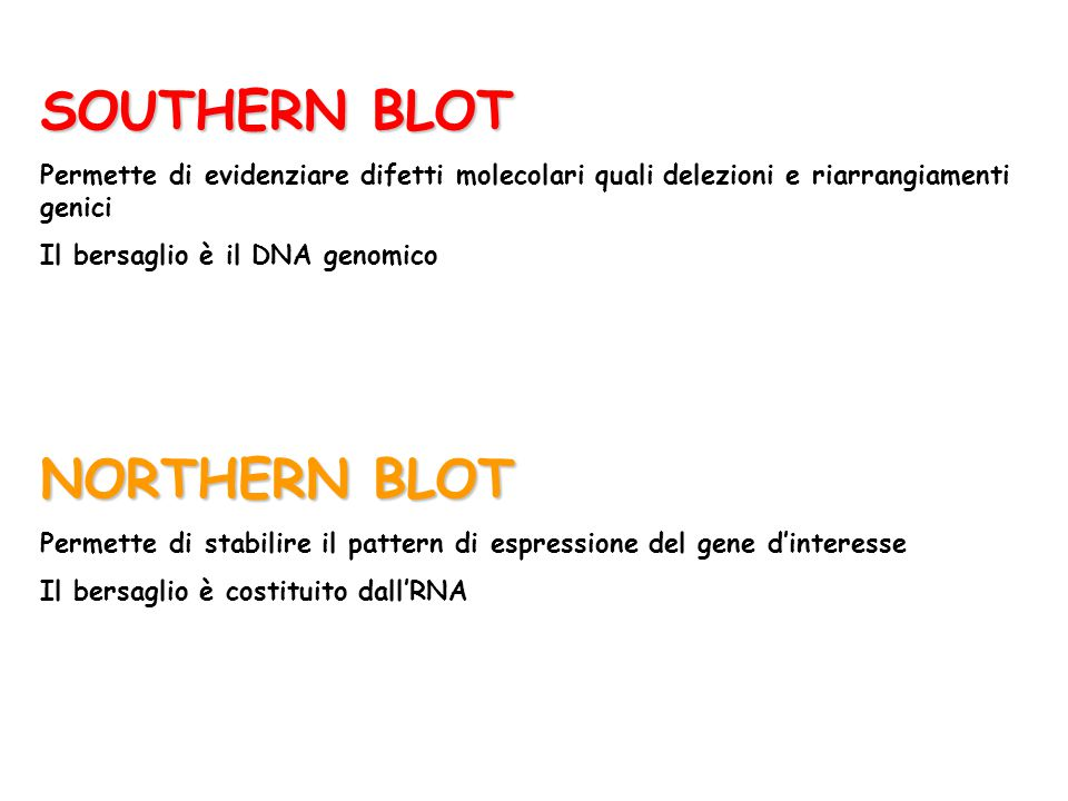 SOUTHERN BLOT NORTHERN BLOT