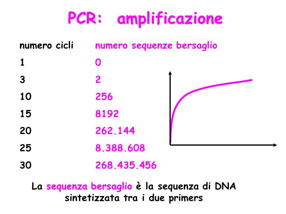 PCR: amplificazione numero cicli 1 3 10 15 20 25 30