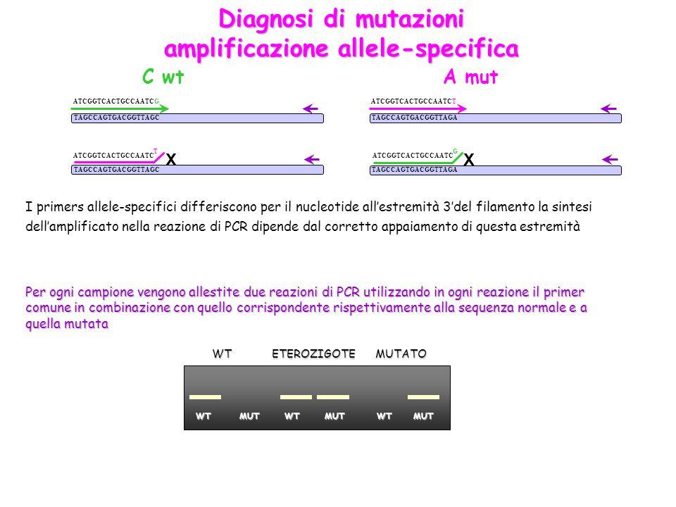 amplificazione allele-specifica