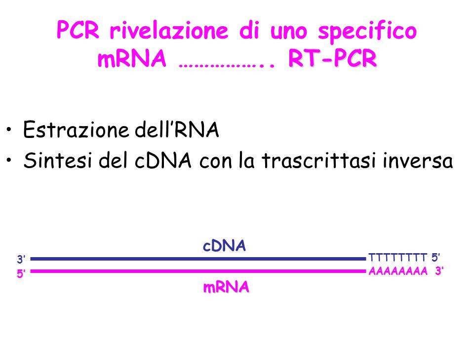 PCR rivelazione di uno specifico mRNA …………….. RT-PCR