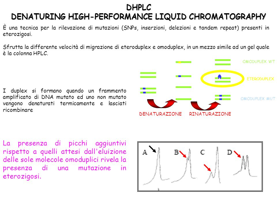 DHPLC DENATURING HIGH-PERFORMANCE LIQUID CHROMATOGRAPHY