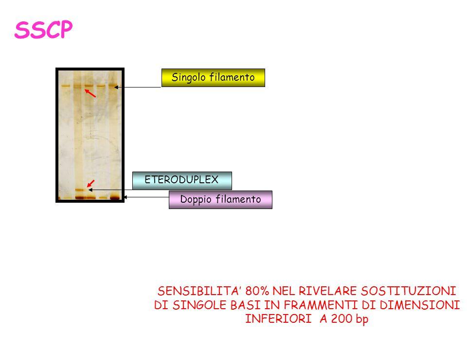 SSCP Singolo filamento. ETERODUPLEX. Doppio filamento.