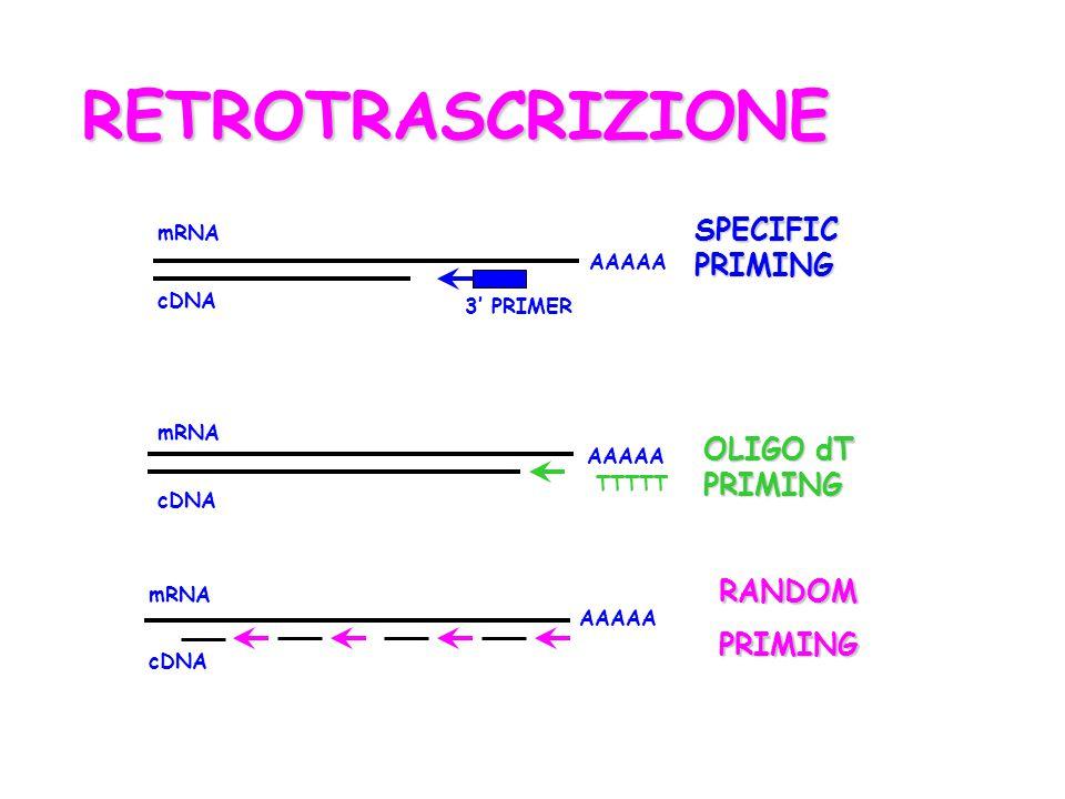 RETROTRASCRIZIONE SPECIFIC PRIMING OLIGO dT PRIMING RANDOM PRIMING