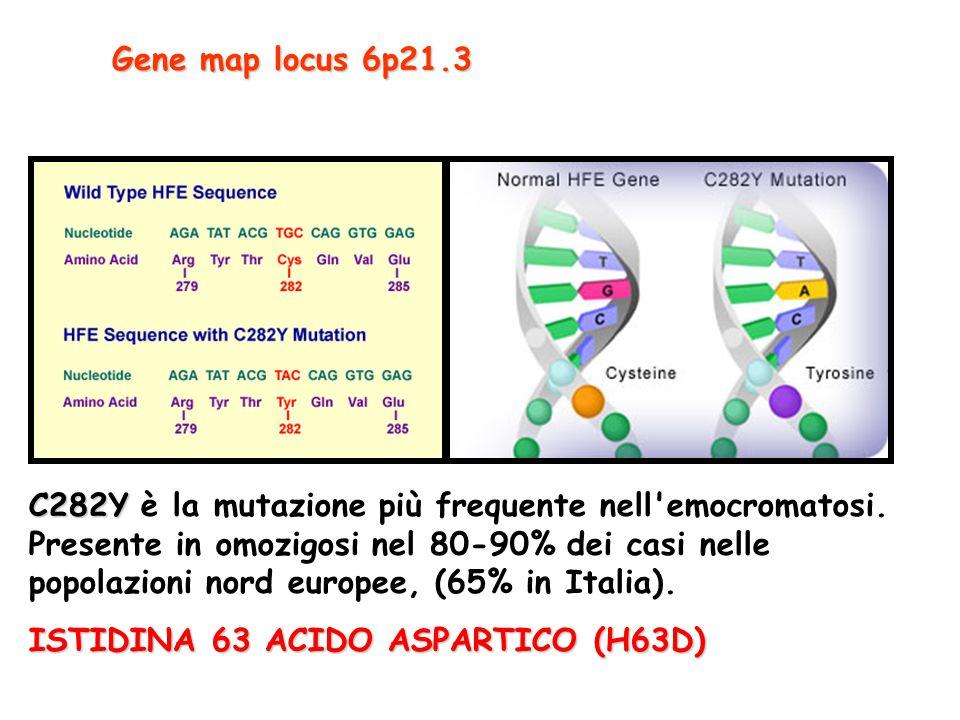 Gene map locus 6p21.3