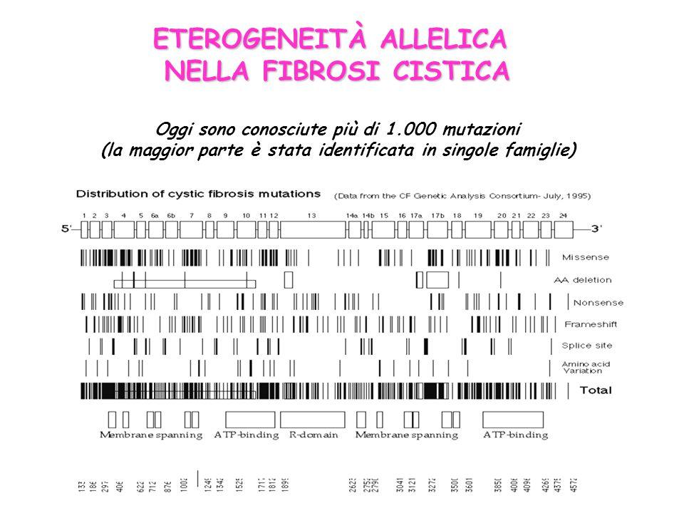 ETEROGENEITÀ ALLELICA NELLA FIBROSI CISTICA