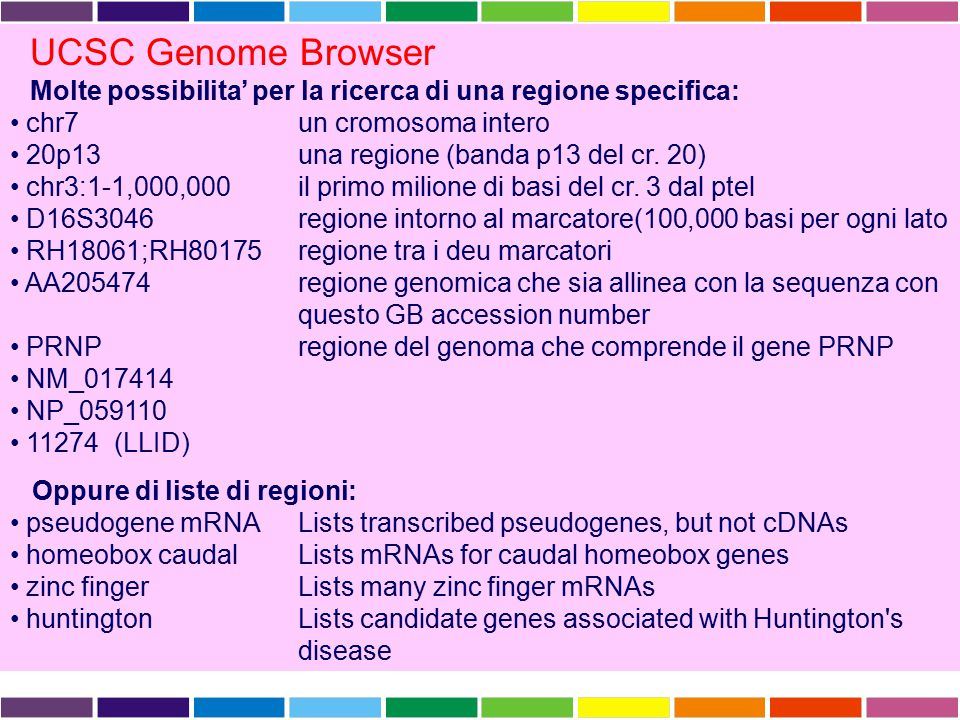UCSC Genome Browser Molte possibilita' per la ricerca di una regione specifica: chr7 un cromosoma intero.