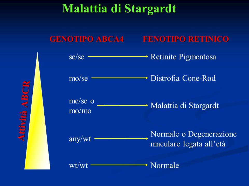 Malattia di Stargardt Attività ABCR GENOTIPO ABCA4 FENOTIPO RETINICO