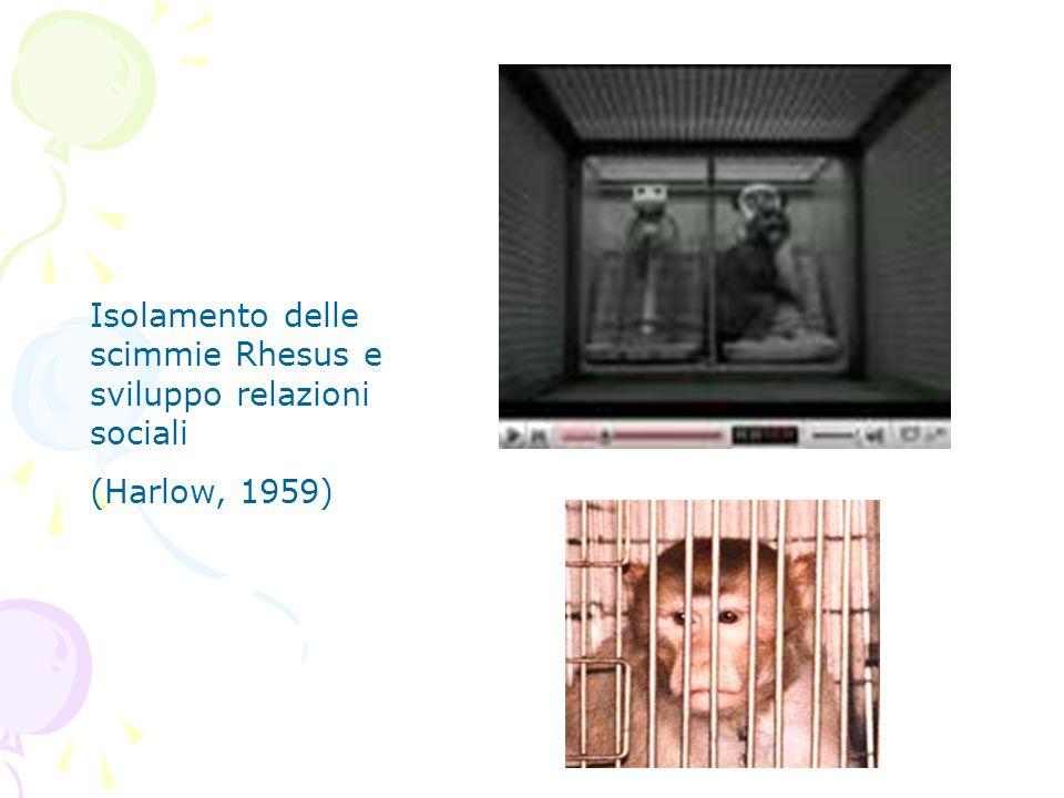 Isolamento delle scimmie Rhesus e sviluppo relazioni sociali
