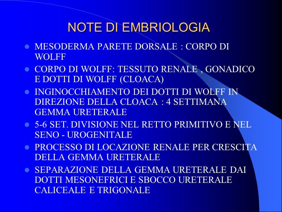 NOTE DI EMBRIOLOGIA MESODERMA PARETE DORSALE : CORPO DI WOLFF
