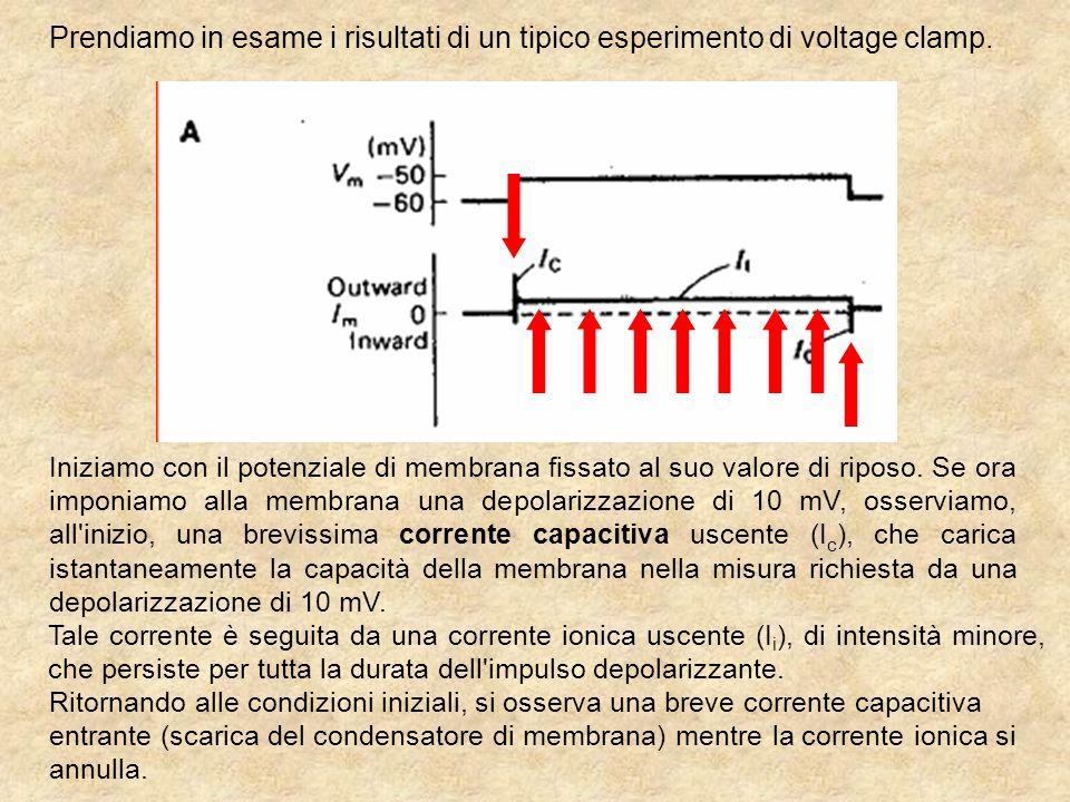 Prendiamo in esame i risultati di un tipico esperimento di voltage clamp.