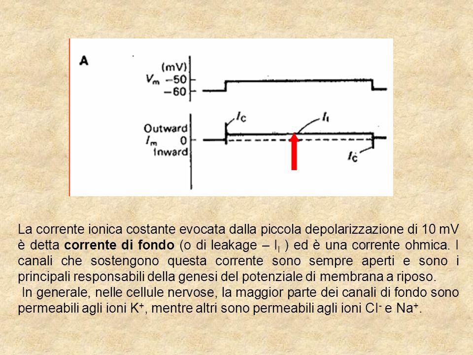 La corrente ionica costante evocata dalla piccola depolarizzazione di 10 mV è detta corrente di fondo (o di leakage – Il ) ed è una corrente ohmica. I canali che sostengono questa corrente sono sempre aperti e sono i principali responsabili della genesi del potenziale di membrana a riposo.
