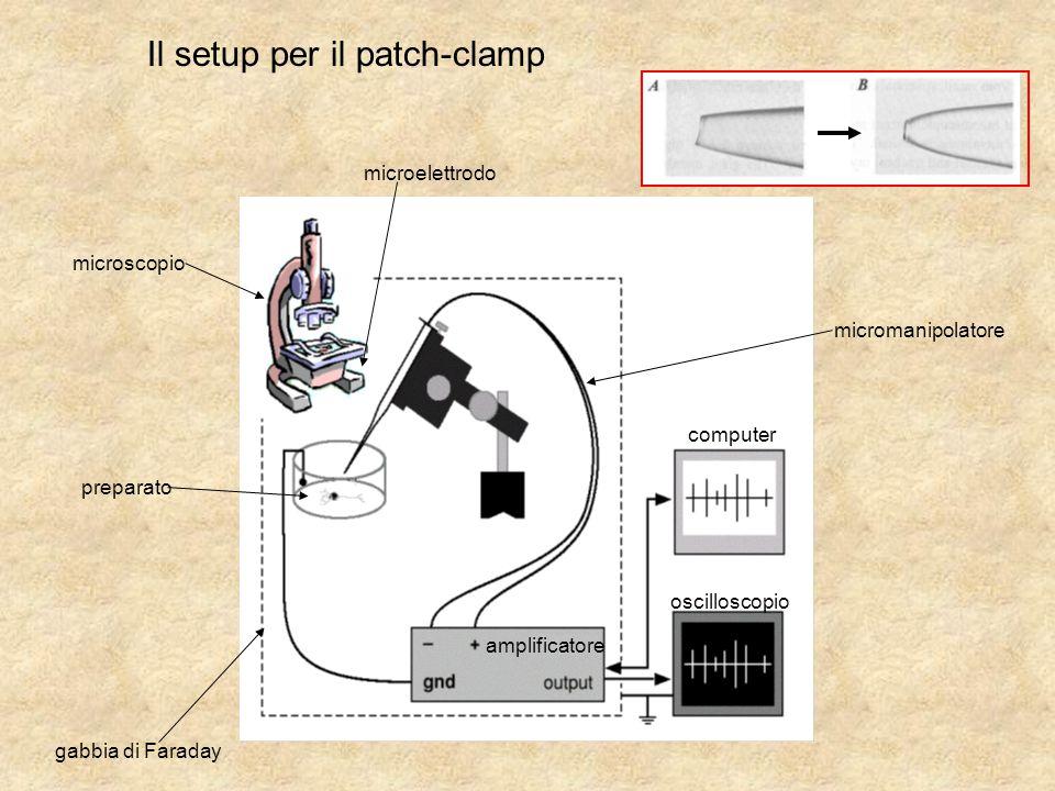 Il setup per il patch-clamp