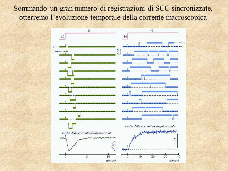 Sommando un gran numero di registrazioni di SCC sincronizzate, otterremo l'evoluzione temporale della corrente macroscopica
