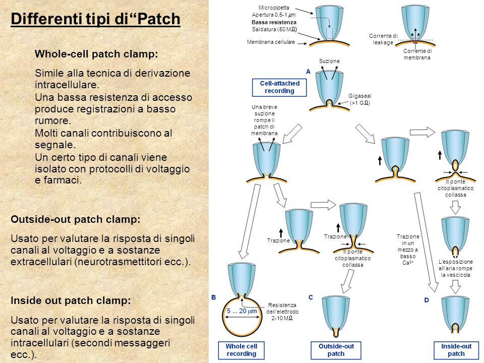 Differenti tipi di Patch