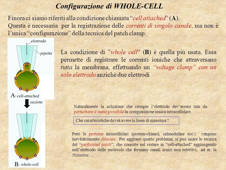 Configurazione di WHOLE-CELL