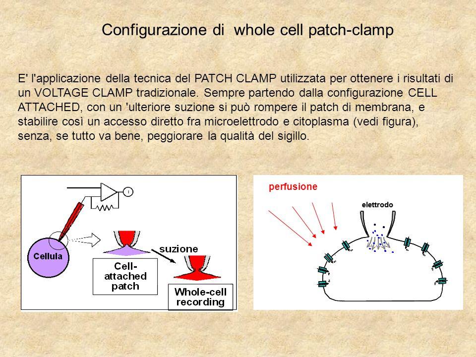 Configurazione di whole cell patch-clamp