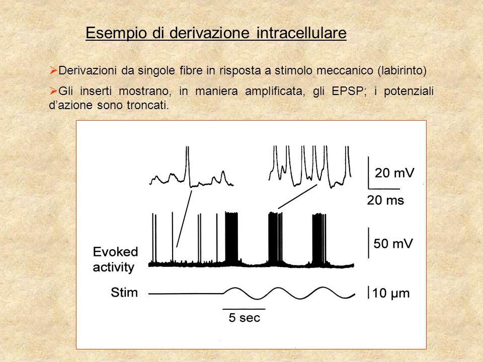 Esempio di derivazione intracellulare