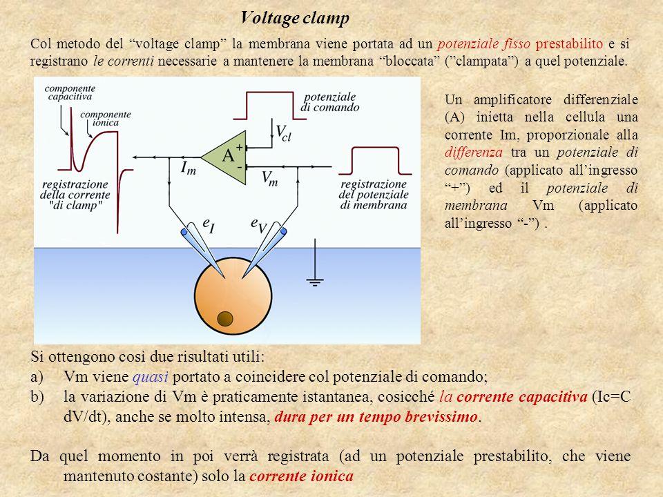 Voltage clamp Si ottengono così due risultati utili: