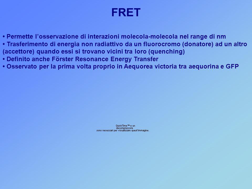 FRET • Permette l'osservazione di interazioni molecola-molecola nel range di nm.