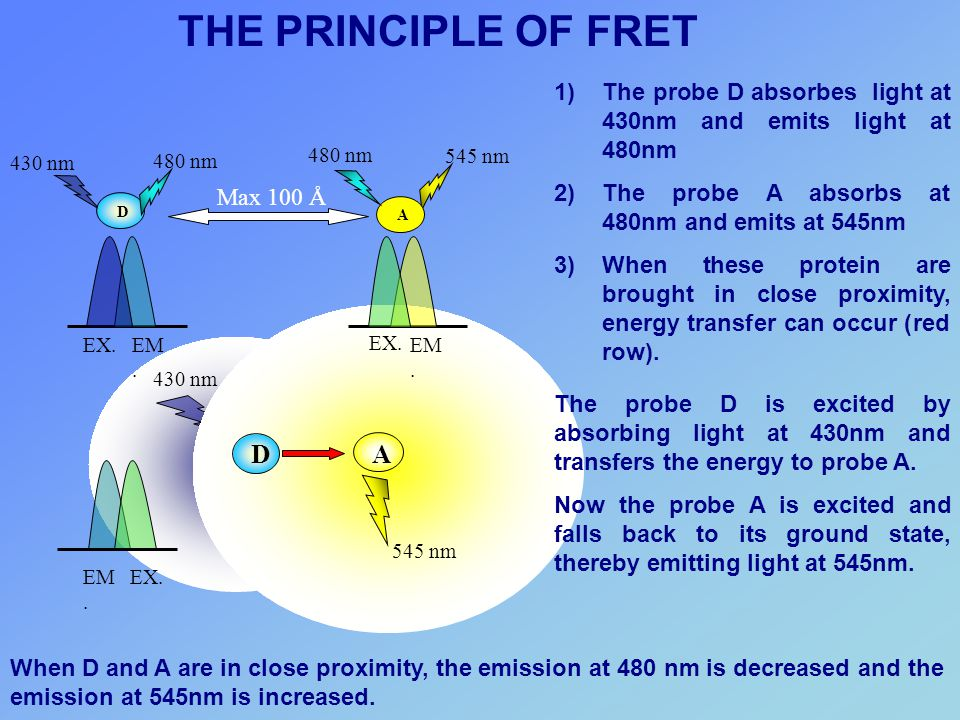 THE PRINCIPLE OF FRET A D